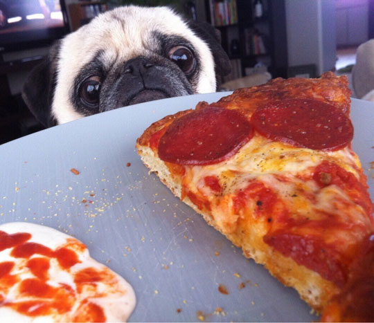 funny-pizza-dog-sad-face1